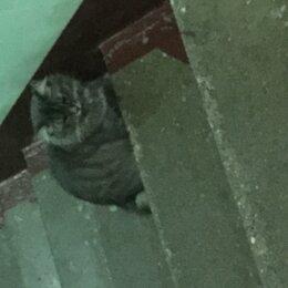 Животные - Найдена кошка или кот, 0