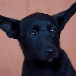 Собаки - Толик и Кнопка, детки мамы-малютки, 0