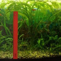 Растения для аквариумов и террариумов - Аквариумные растения, 0
