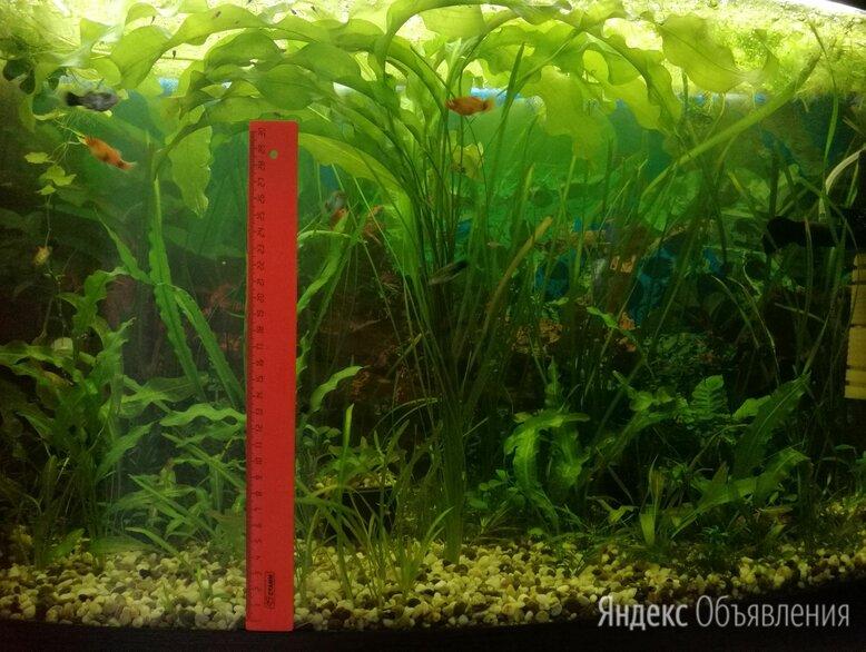 Аквариумные растения по цене 150₽ - Растения для аквариумов и террариумов, фото 0