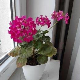 Комнатные растения - Цветы комнатные, 0