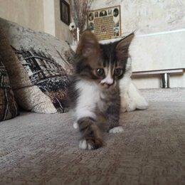 Кошки - Самые замечательные котята!!!, 0