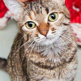 Кошки - Ласковая и ручная молодая кошечка Брыска, 0