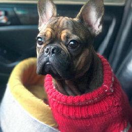 Собаки - Французский бульдог Артикул : GFR 5045, 0