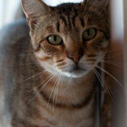 Кошки - Метис бенгала Дилан ждёт семью в Лесном приюте, 0