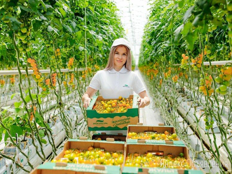 Рабочие на уборку овощей - Рабочие, фото 0