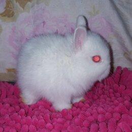 Кролики - Самая маленькая в мире порода🐰🐾 Нидерланские карлики , 0