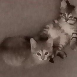 Кошки - Котята 1,5 мес.мальчик и девочка , 0