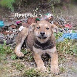 Собаки - Щенок девочка 3 мес. отдам даром, 0