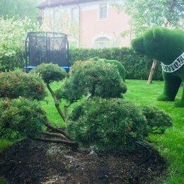 Бытовые услуги - Посадка и удаление деревьев, 0