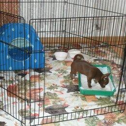 Собаки - Милые щеночки чихуахуа, 0