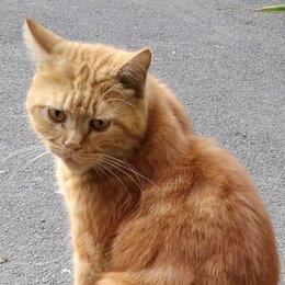 Животные - Рыжий кот, 0