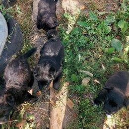 Собаки - Щенки дворняги., 0