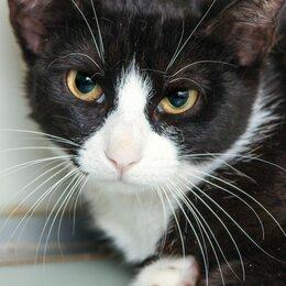 Кошки - Скромная котёнок-девочка Умница, 0