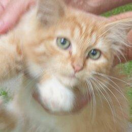 Животные - Рыжий котенок, 0