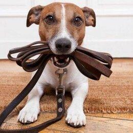 Услуги для животных - Выгул собак , 0