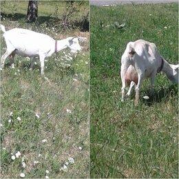 Сельскохозяйственные животные и птицы - Животные  .козы, 0