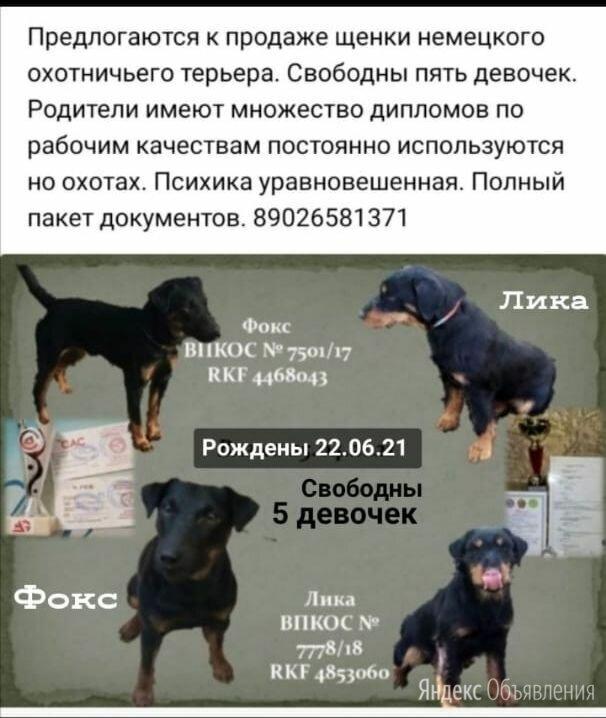 Щенки немецкого охотничего терьера по цене 12000₽ - Собаки, фото 0