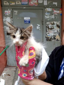Кошки - отдам котенка, 0