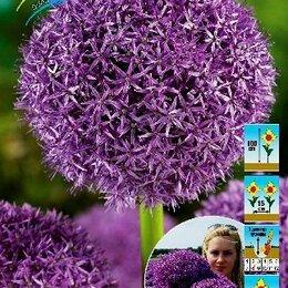 Луковичные растения - Лук декоративный Глоубмастер 1 шт, 0