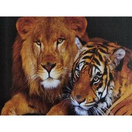 Пуховики - Лев и тигр Артикул : CK 1268, 0