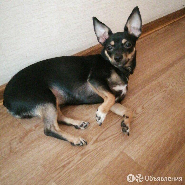 Собаки по цене даром - Собаки, фото 0