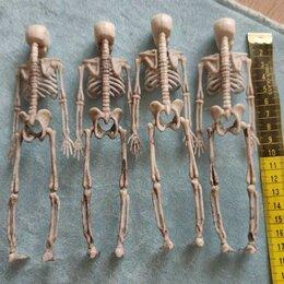 Игровые наборы и фигурки - Скелет человека для детей, 0