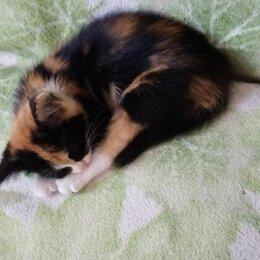 Животные - Отдам даром, котёнка в добрые руки! , 0