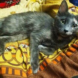 Животные - Пропала кошка, помогите найти! , 0