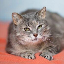 Кошки - Амели - кошка-спасибо в добрые руки , 0