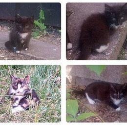 Кошки - Красивые котятки ищут порядочных хозяев!!! , 0