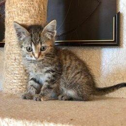 Кошки - Кроху-кошечку не приняли в семье взрослые кошки...., 0