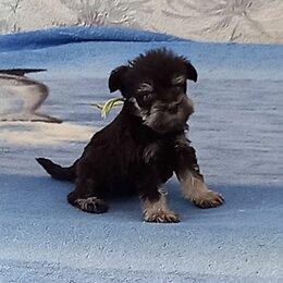 Собаки - Мини цвергшнауцер черный, 0
