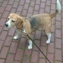 Животные - Пропала собака помогите найти, 0