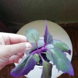 Комнатные растения - Цветочки по 100р, 0