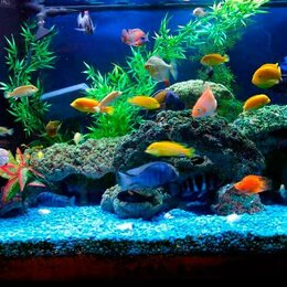 Работа с животными - Аквариумист - Специалист по обслуживанию аквариумов, 0