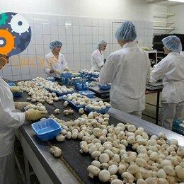Грузчики - Грузчик на грибное производство на вахту с питанием и проживанием , 0