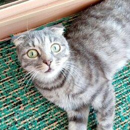 Кошки - Шотландская вислоухая кошка, 0