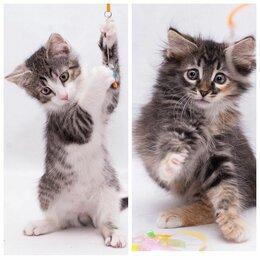 Кошки - Малыши котята, котик и кошечка, 2,5 мес. В дар., 0
