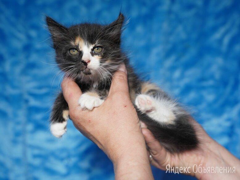 Счастьице по цене даром - Кошки, фото 0