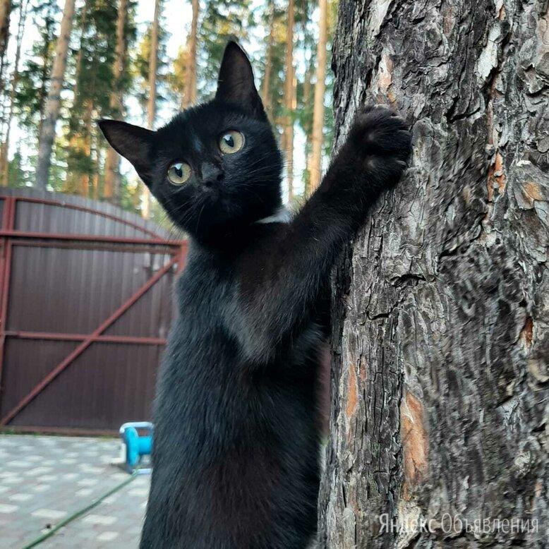 Котенок девочка по цене даром - Кошки, фото 0