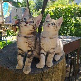 Кошки - Котята в добрые и заботливые руки, 0