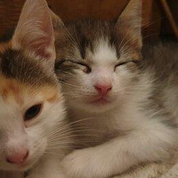 Кошки - Домашние животные, 0