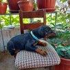 Доберман щенок по цене 18000₽ - Собаки, фото 8