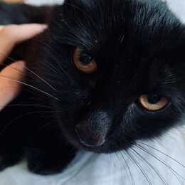 Кошки - Отдам чёрного котенка в добрые руки , 0