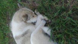 Собаки - Девочка ищет добрые руки, 0