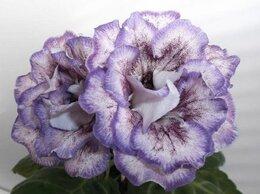 Комнатные растения - Глоксинии (излишки коллекции), 0
