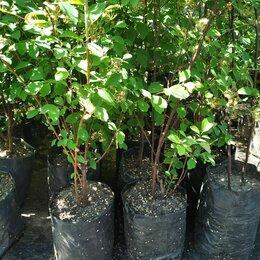 Рассада, саженцы, кустарники, деревья - Растения, 0