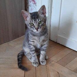 Кошки - Дымчатый окрас мальчик Йода 4 мес ищет свой дом, 0