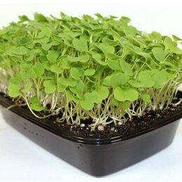 Семена - Руккола семена для проращивания микрозелени и беби зелени, 100г, 0